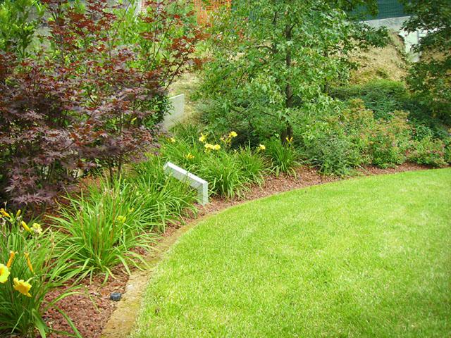 Giardino con olivo secolare progettazione giardini for Aiuola con olivo