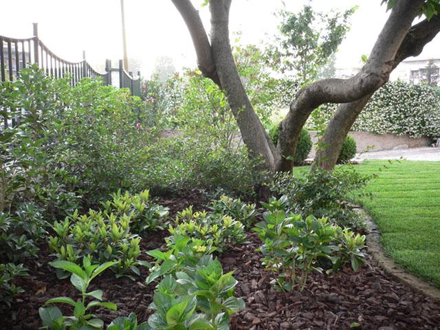 Ripristino giardino storico - Progettazione Giardini